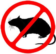 Chống chuột ô tô – Phòng bệnh hơn chữa bệnh!